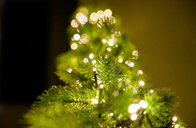 O que fazer com o pinheiro de Natal?