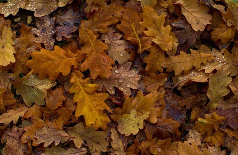 Espiral de ciclos: as lições do outono